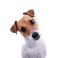 Curso de Adestramento de Cães – Lições Básicas