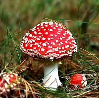 Fungos – Curso de Biologia