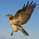 Curso sobre Aves – Biologia