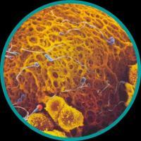 Curso de Embriologia – Biologia