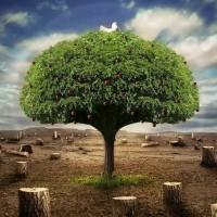 Ecologia – Curso de Biologia
