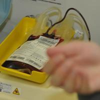 Curso de Terapia Transfusional
