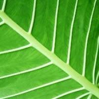 Curso de Fisiologia vegetal