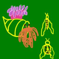 Curso de Relações Ecológicas – Biologia