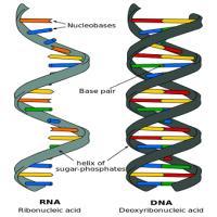 Curso de Genes, DNA e RNA – Biologia