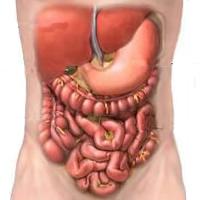 Sistema Digestório – Curso de Biologia