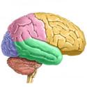 Curso de Sistema Nervoso