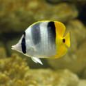 Curso sobre Peixes – Biologia