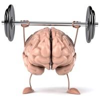 Curso de Neuroanatomia